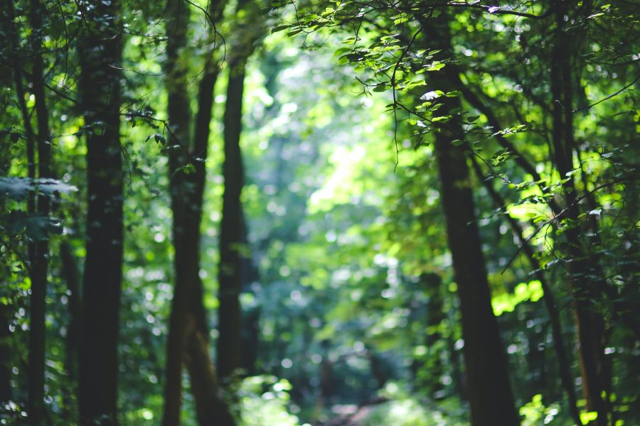 Investing in Trees – How Does it Work?
